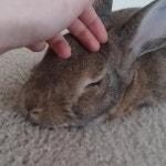 Daily Bunny♡